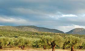 Eumelia Organic Agrotourism (incl. auto)
